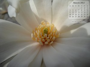 march flower blossom calendar